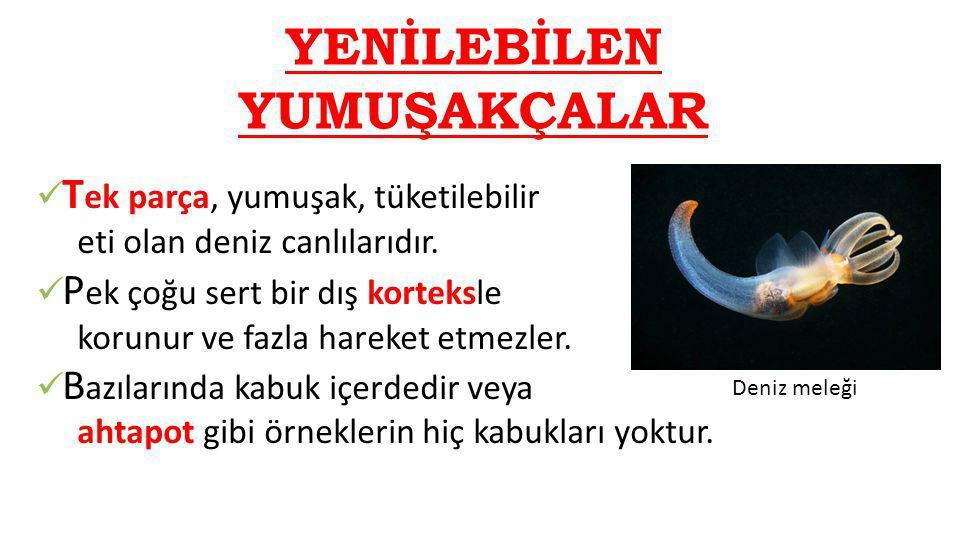 Osmanlı Deniz Mutfağımız Günümüz Türk mutfağı içerisinde deniz ürünlerinin yeri Osmanlı'ya göre neredeyse yok sayılır.