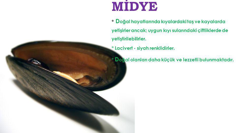 Deniz Minaresi K arasularda yaşayan salyangoz türüdür. 18