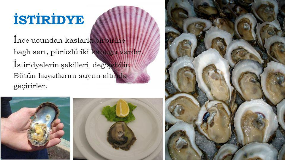 Osmanlı Deniz Mutfağımız Sabah kahvaltısında Fatih Sultan Mehmet'in sarımsaklı veya soğanlı balık yediğini görüyoruz.