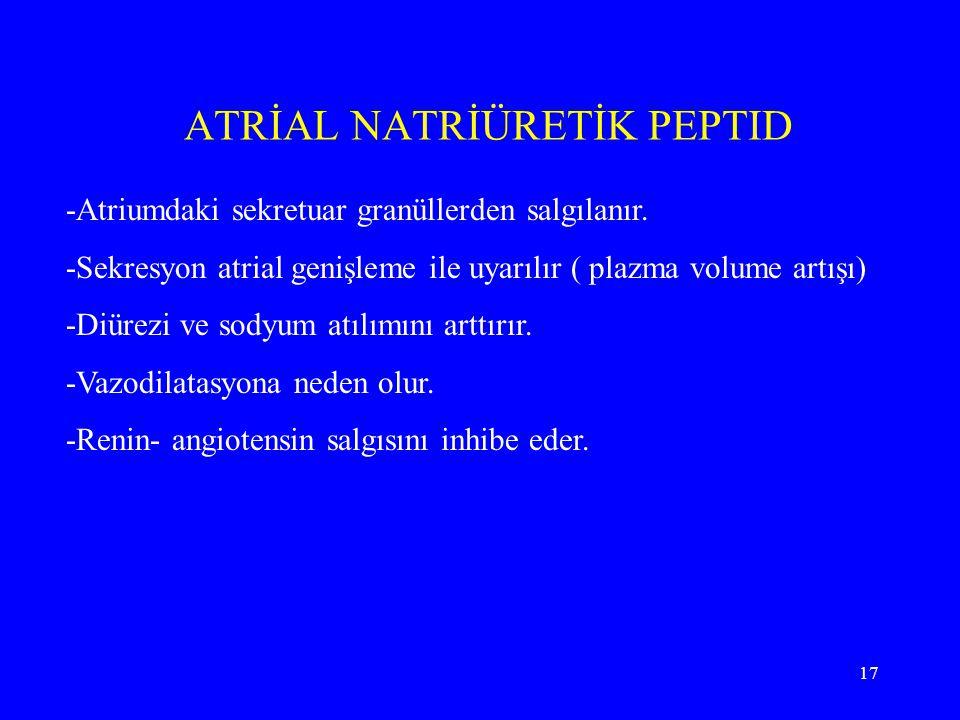 17 ATRİAL NATRİÜRETİK PEPTID -Atriumdaki sekretuar granüllerden salgılanır. -Sekresyon atrial genişleme ile uyarılır ( plazma volume artışı) -Diürezi