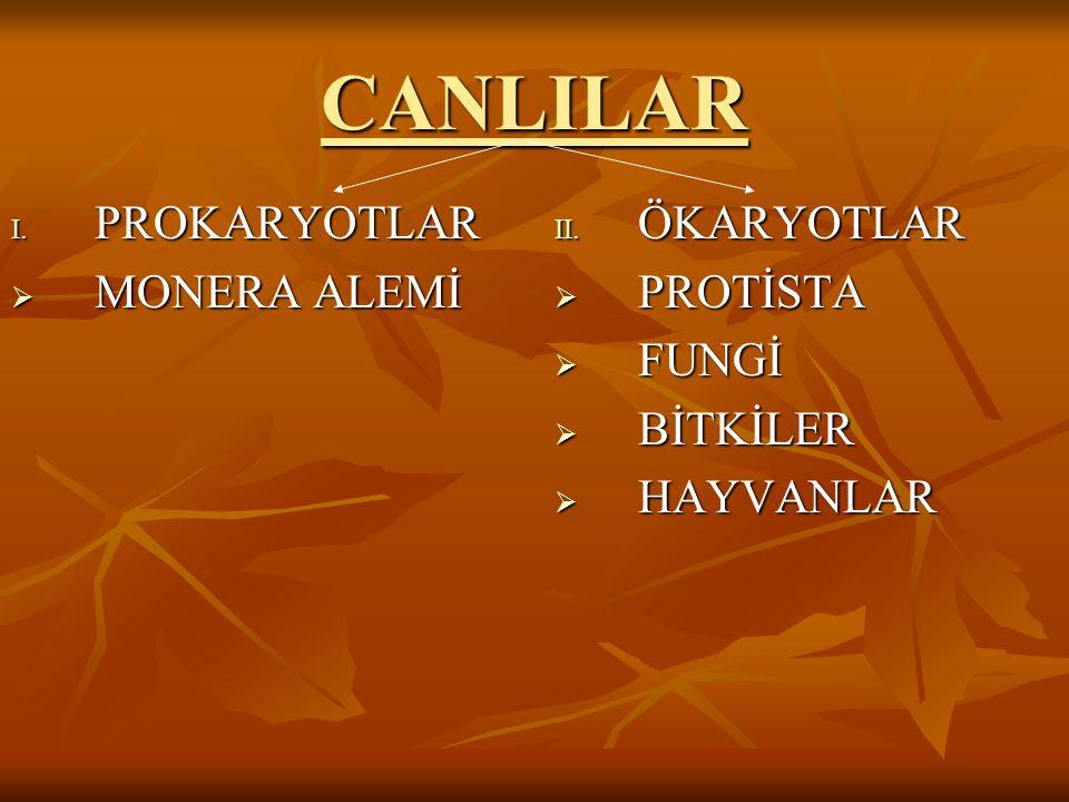 CANLILAR I. PROKARYOTLAR  MONERA ALEMİ II. ÖKARYOTLAR  PROTİSTA  FUNGİ  BİTKİLER  HAYVANLAR