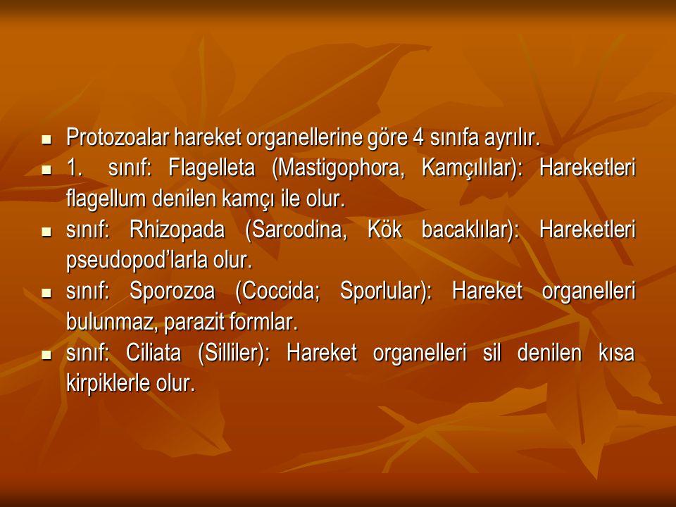 Protozoalar hareket organellerine göre 4 sınıfa ayrılır. Protozoalar hareket organellerine göre 4 sınıfa ayrılır. 1.sınıf: Flagelleta (Mastigophora, K