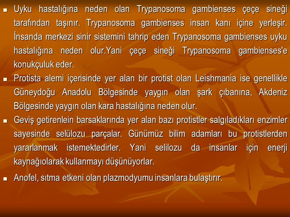 Uyku hastalığına neden olan Trypanosoma gambienses çeçe sineği tarafından taşınır. Trypanosoma gambienses insan kanı içine yerleşir. İnsanda merkezi s