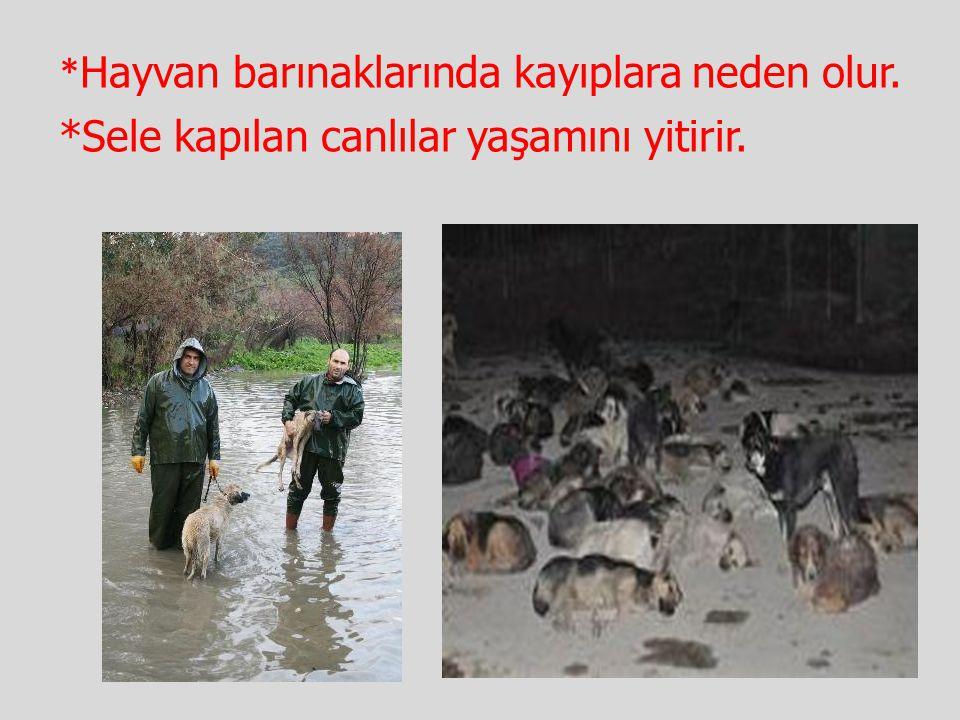 * Hayvan barınaklarında kayıplara neden olur. *Sele kapılan canlılar yaşamını yitirir.