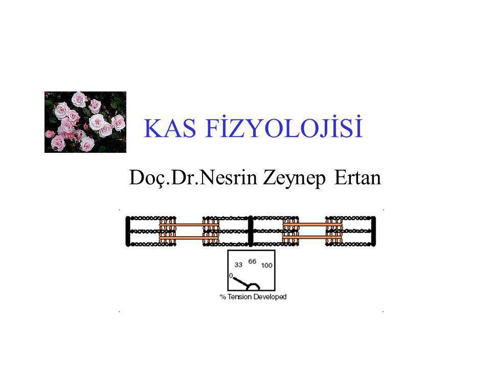 KAS FİZYOLOJİSİ Doç.Dr.Nesrin Zeynep Ertan