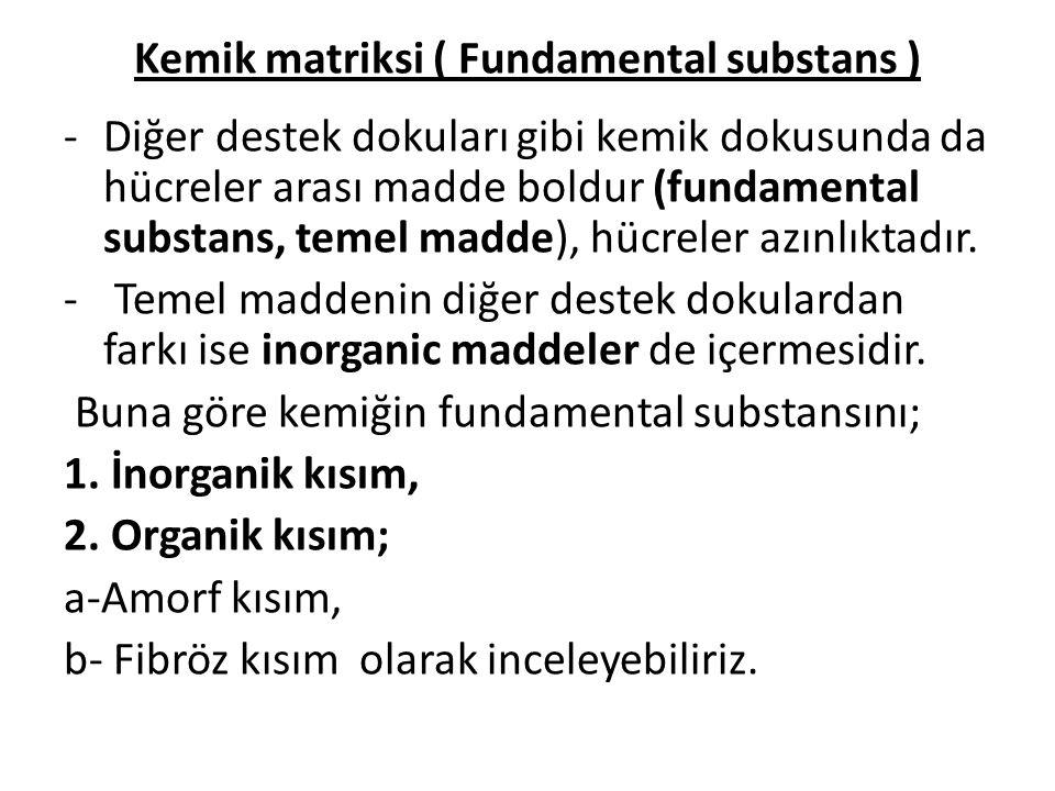 Kemik matriksi ( Fundamental substans ) -Diğer destek dokuları gibi kemik dokusunda da hücreler arası madde boldur (fundamental substans, temel madde)