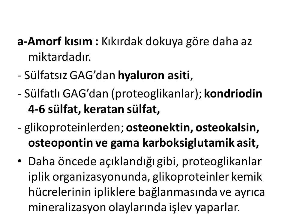 a-Amorf kısım : Kıkırdak dokuya göre daha az miktardadır. - Sülfatsız GAG'dan hyaluron asiti, - Sülfatlı GAG'dan (proteoglikanlar); kondriodin 4-6 sül