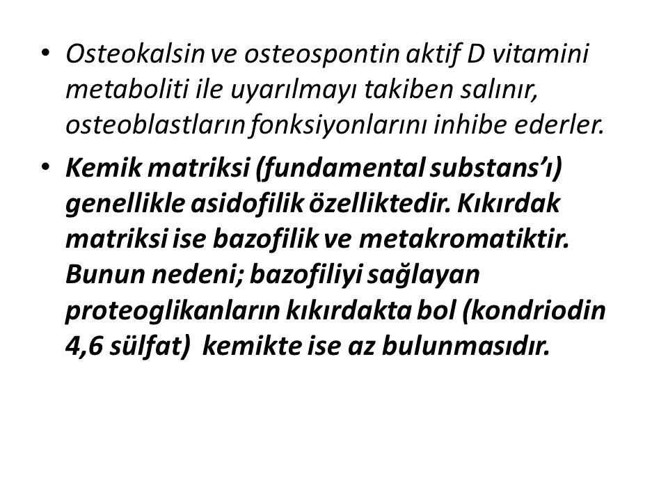 Osteokalsin ve osteospontin aktif D vitamini metaboliti ile uyarılmayı takiben salınır, osteoblastların fonksiyonlarını inhibe ederler. Kemik matriksi