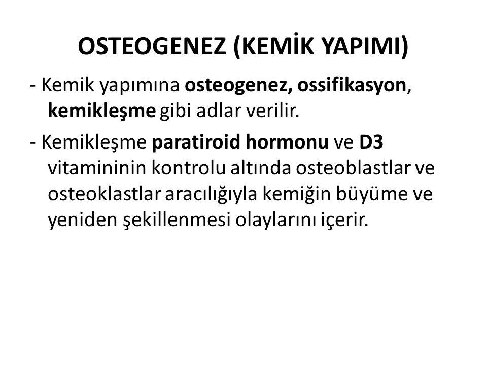 OSTEOGENEZ (KEMİK YAPIMI) - Kemik yapımına osteogenez, ossifikasyon, kemikleşme gibi adlar verilir. - Kemikleşme paratiroid hormonu ve D3 vitamininin