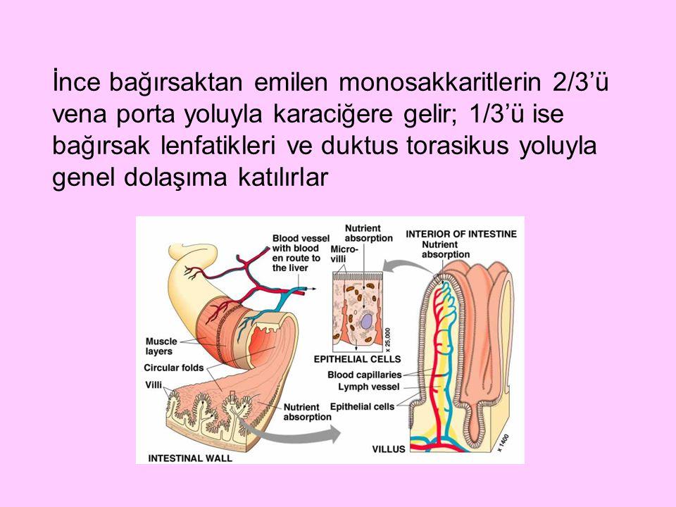 İnce bağırsaktan emilen monosakkaritlerin 2/3'ü vena porta yoluyla karaciğere gelir; 1/3'ü ise bağırsak lenfatikleri ve duktus torasikus yoluyla genel