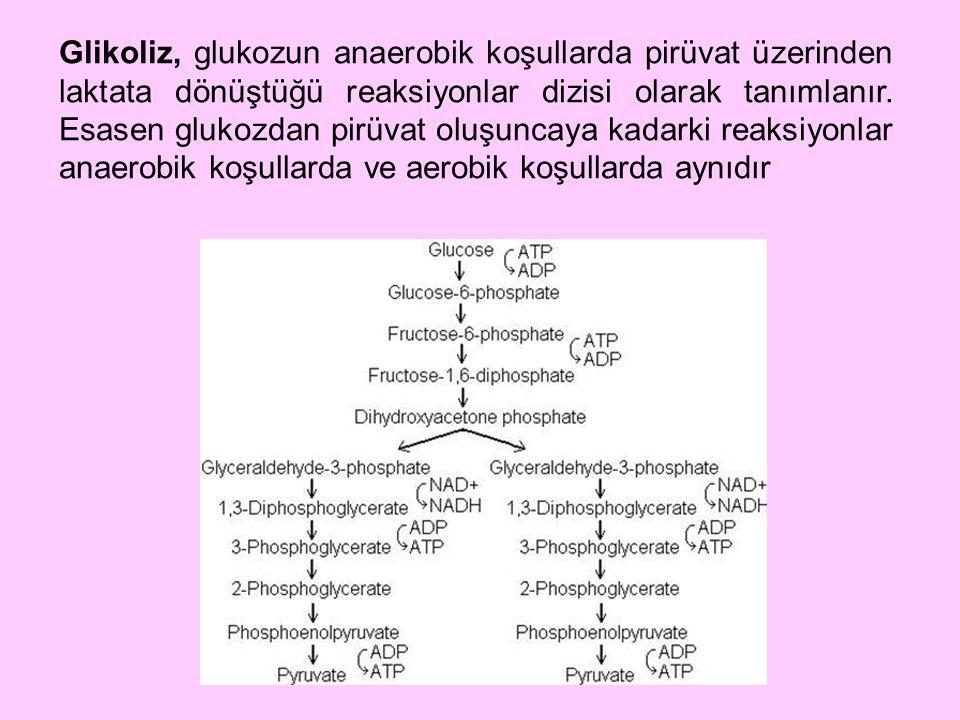 Glikoliz, glukozun anaerobik koşullarda pirüvat üzerinden laktata dönüştüğü reaksiyonlar dizisi olarak tanımlanır. Esasen glukozdan pirüvat oluşuncaya