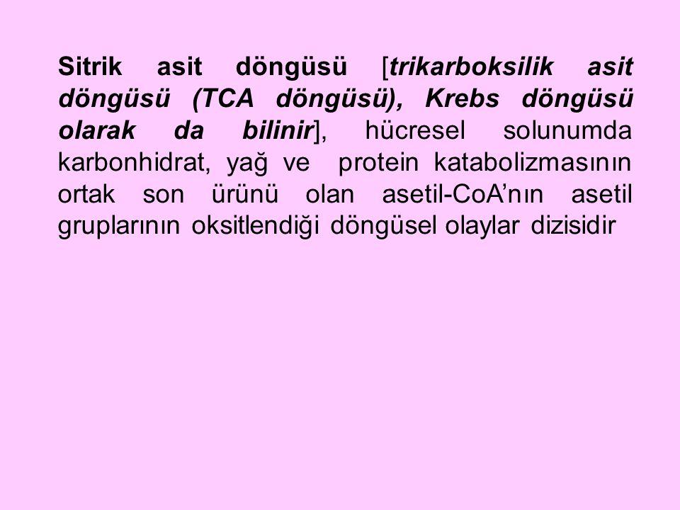 Sitrik asit döngüsü [trikarboksilik asit döngüsü (TCA döngüsü), Krebs döngüsü olarak da bilinir], hücresel solunumda karbonhidrat, yağ ve protein kata
