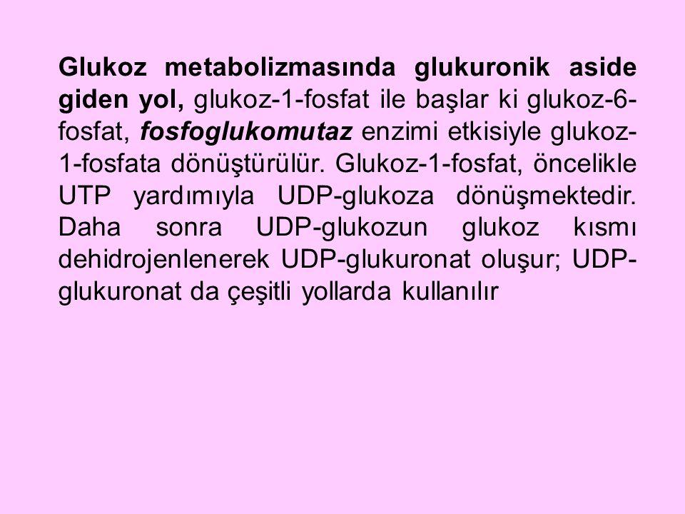 Glukoz metabolizmasında glukuronik aside giden yol, glukoz-1-fosfat ile başlar ki glukoz-6- fosfat, fosfoglukomutaz enzimi etkisiyle glukoz- 1-fosfata
