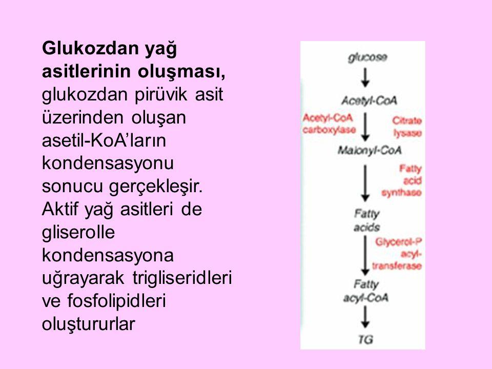 Glukozdan yağ asitlerinin oluşması, glukozdan pirüvik asit üzerinden oluşan asetil-KoA'ların kondensasyonu sonucu gerçekleşir. Aktif yağ asitleri de g