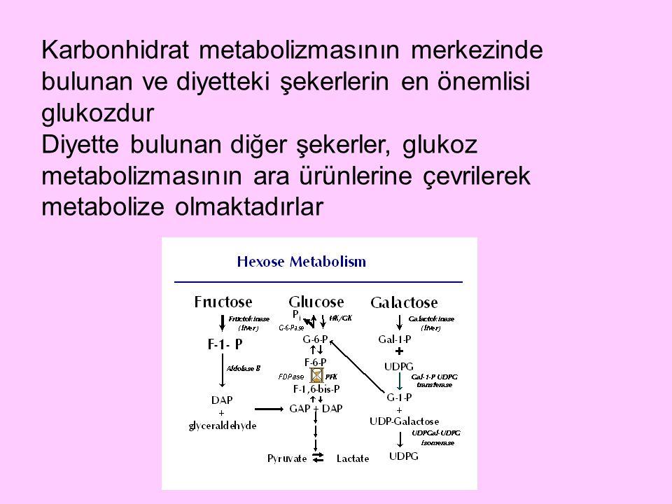 Karbonhidrat metabolizmasının merkezinde bulunan ve diyetteki şekerlerin en önemlisi glukozdur Diyette bulunan diğer şekerler, glukoz metabolizmasının