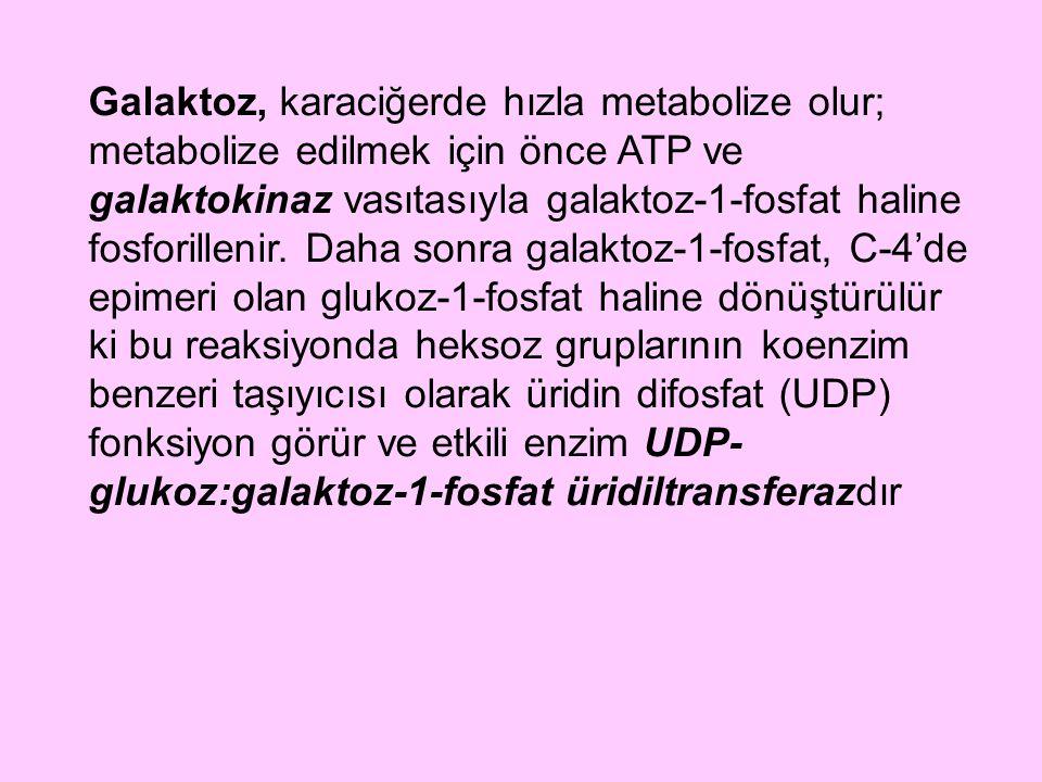 Galaktoz, karaciğerde hızla metabolize olur; metabolize edilmek için önce ATP ve galaktokinaz vasıtasıyla galaktoz-1-fosfat haline fosforillenir. Daha