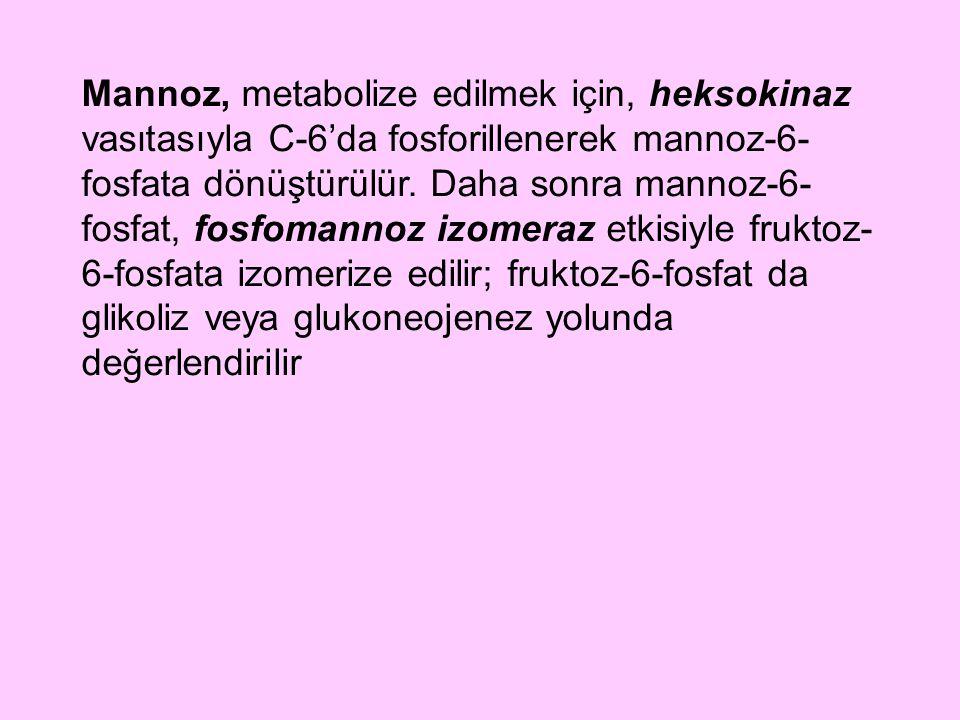 Mannoz, metabolize edilmek için, heksokinaz vasıtasıyla C-6'da fosforillenerek mannoz-6- fosfata dönüştürülür. Daha sonra mannoz-6- fosfat, fosfomanno