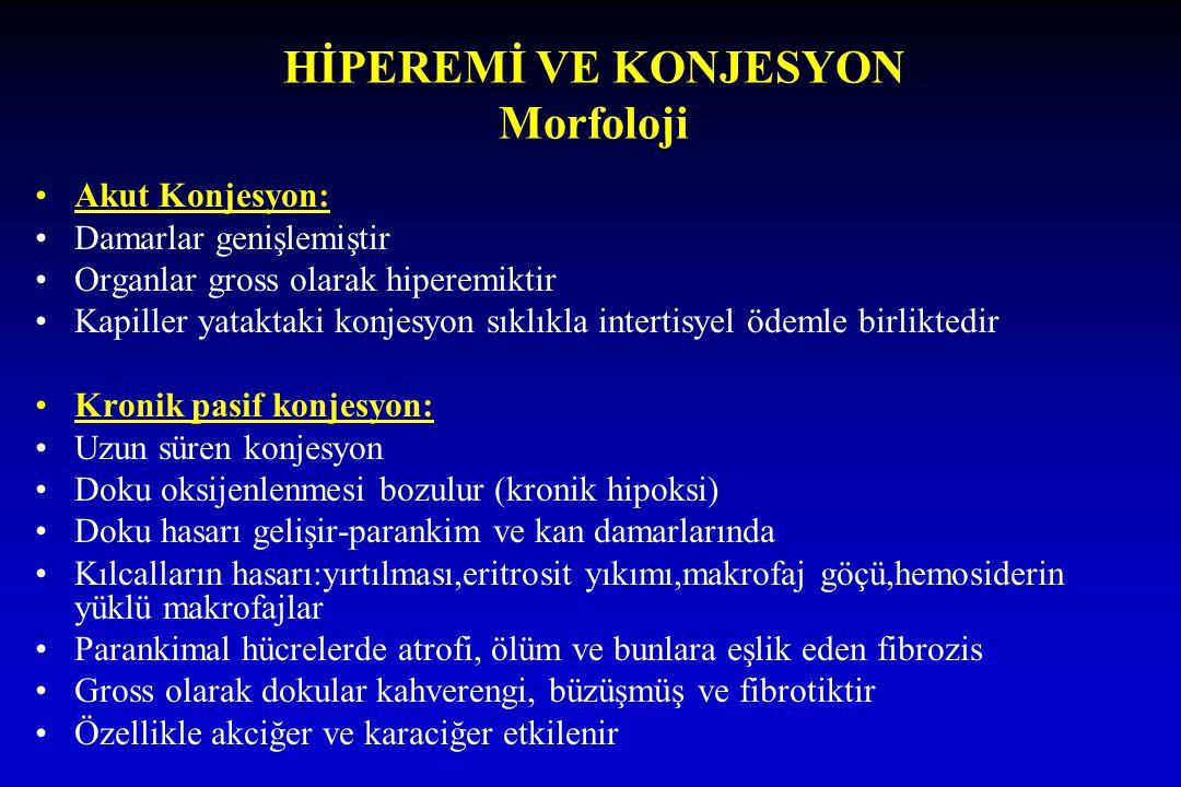 HİPEREMİ VE KONJESYON Morfoloji Akut Konjesyon: Damarlar genişlemiştir Organlar gross olarak hiperemiktir Kapiller yataktaki konjesyon sıklıkla intert