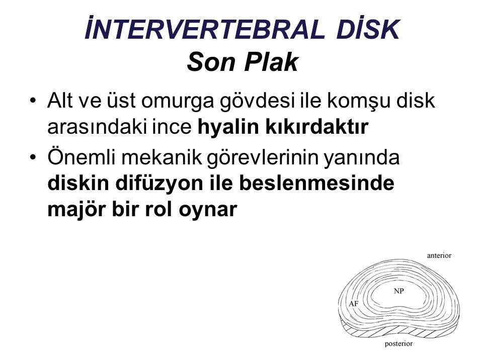 İNTERVERTEBRAL DİSK Son Plak Alt ve üst omurga gövdesi ile komşu disk arasındaki ince hyalin kıkırdaktır Önemli mekanik görevlerinin yanında diskin di