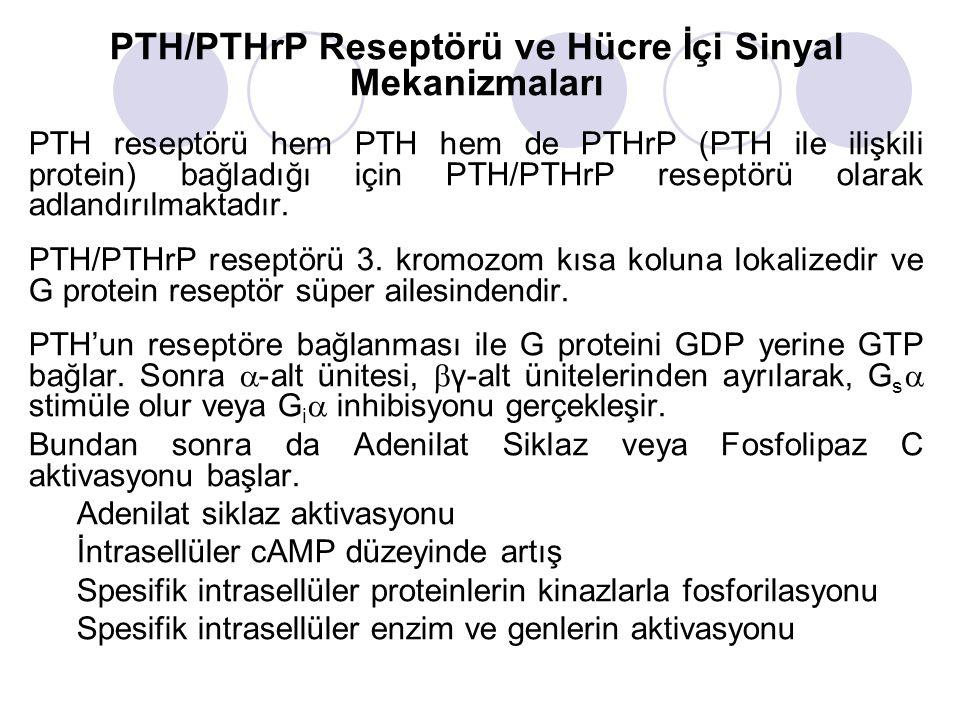 PTH/PTHrP Reseptörü ve Hücre İçi Sinyal Mekanizmaları PTH reseptörü hem PTH hem de PTHrP (PTH ile ilişkili protein) bağladığı için PTH/PTHrP reseptörü olarak adlandırılmaktadır.