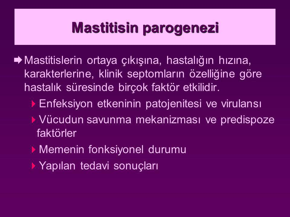 Mastitisin parogenezi  Mastitislerin ortaya çıkışına, hastalığın hızına, karakterlerine, klinik septomların özelliğine göre hastalık süresinde birçok