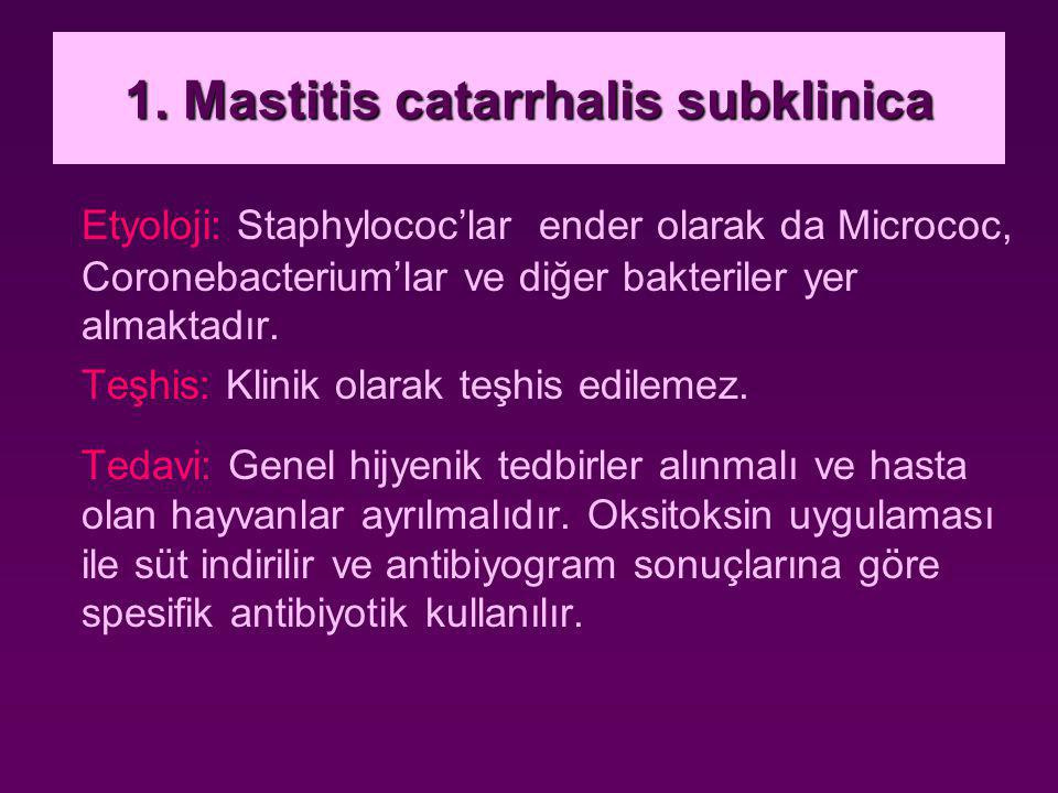 1. Mastitis catarrhalis subklinica Etyoloji: Staphylococ'lar ender olarak da Micrococ, Coronebacterium'lar ve diğer bakteriler yer almaktadır. Teşhis: