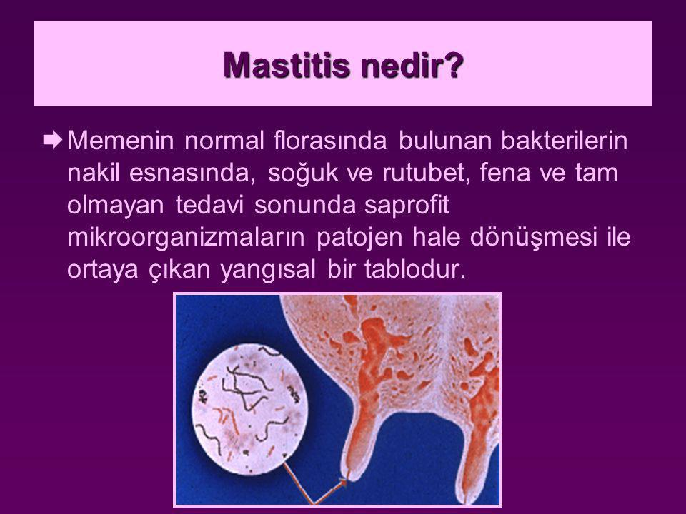 Ekonomik önemi  Akut mastitis: gerek tedaviyi müteakip ilaçların sütle atılmasından dolayı oluşan süt kaybı, gerekse de memenin sağlıklı süt vermeye başlamasına kadar oluşan süt kaybı önemlidir.