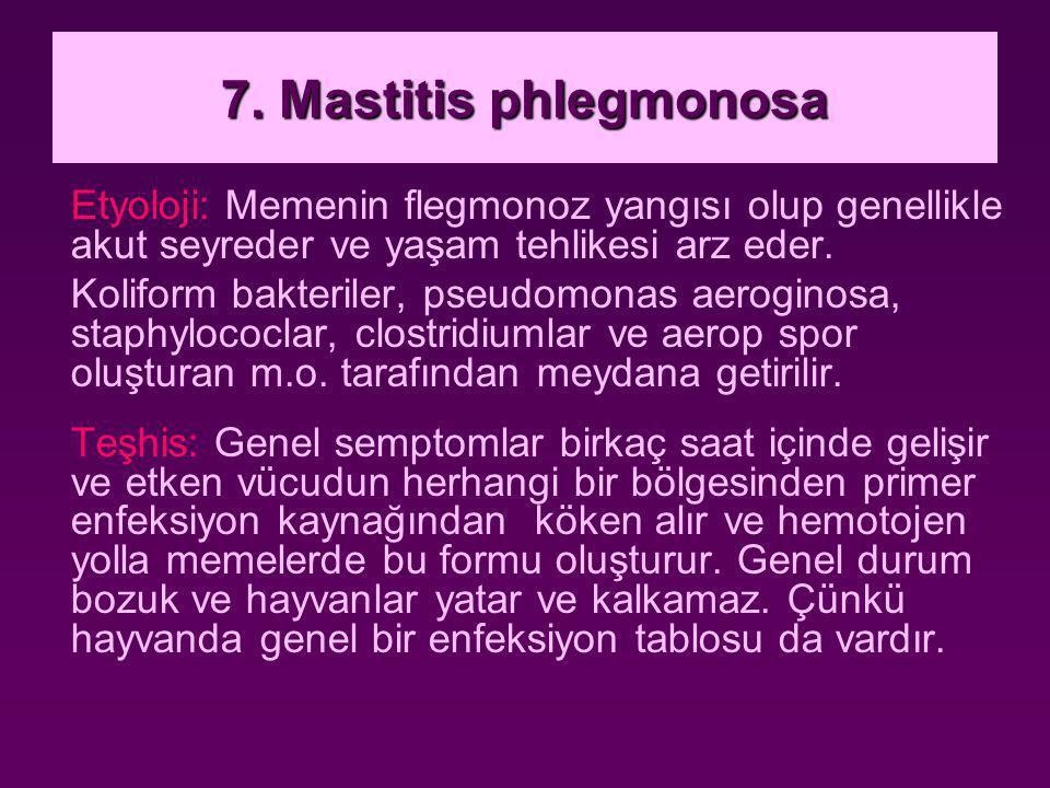 7. Mastitis phlegmonosa Etyoloji: Memenin flegmonoz yangısı olup genellikle akut seyreder ve yaşam tehlikesi arz eder. Koliform bakteriler, pseudomona