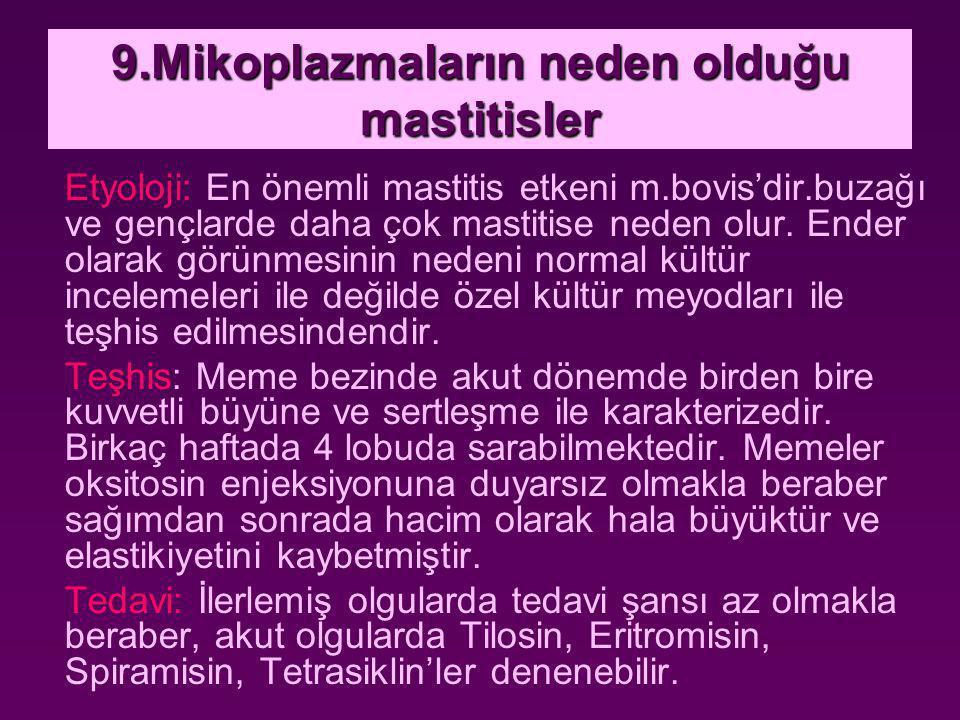 9.Mikoplazmaların neden olduğu mastitisler Etyoloji: En önemli mastitis etkeni m.bovis'dir.buzağı ve gençlarde daha çok mastitise neden olur. Ender ol