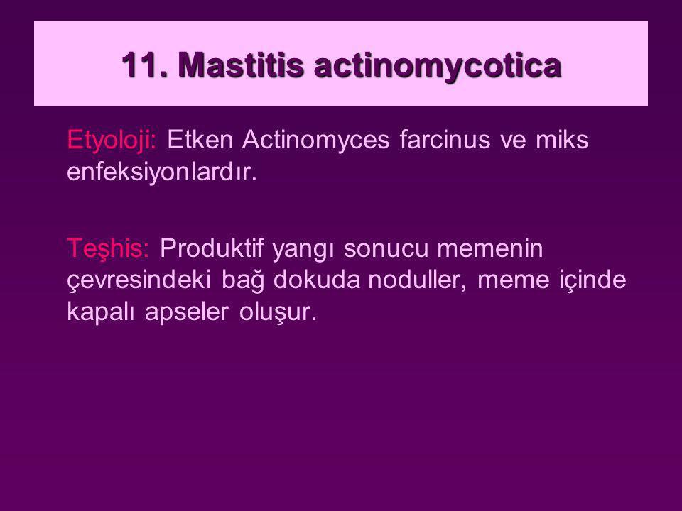 11. Mastitis actinomycotica Etyoloji: Etken Actinomyces farcinus ve miks enfeksiyonlardır. Teşhis: Produktif yangı sonucu memenin çevresindeki bağ dok