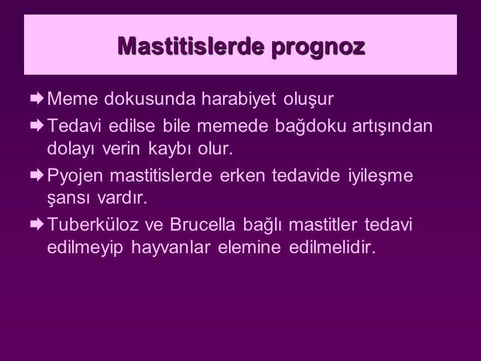 Mastitislerde prognoz  Meme dokusunda harabiyet oluşur  Tedavi edilse bile memede bağdoku artışından dolayı verin kaybı olur.  Pyojen mastitislerde