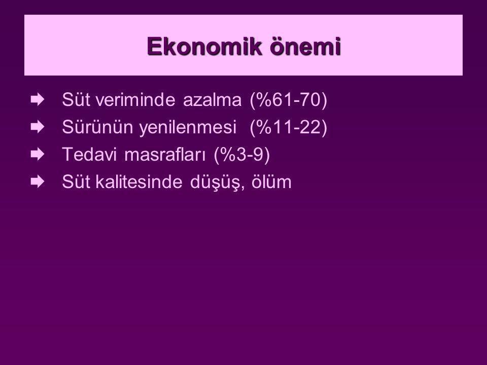 12.Mastitis biastomycotica Etyoloji: Etken Cryptococcus neoformans'dır.