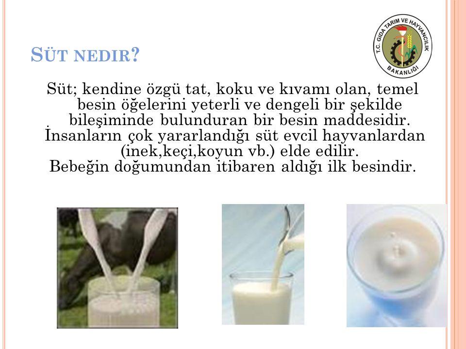 S ÜT NEDIR ? Süt; kendine özgü tat, koku ve kıvamı olan, temel besin öğelerini yeterli ve dengeli bir şekilde bileşiminde bulunduran bir besin maddesi