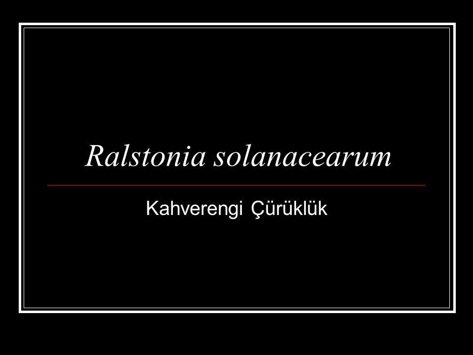 Ralstonia solanacearum Kahverengi Çürüklük