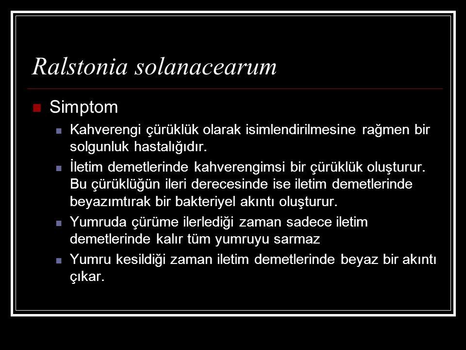 Ralstonia solanacearum Simptom Kahverengi çürüklük olarak isimlendirilmesine rağmen bir solgunluk hastalığıdır. İletim demetlerinde kahverengimsi bir