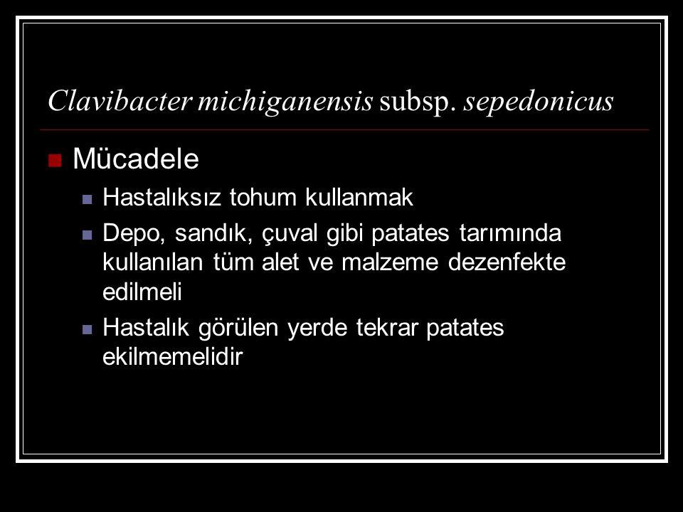 Mücadele Hastalıksız tohum kullanmak Depo, sandık, çuval gibi patates tarımında kullanılan tüm alet ve malzeme dezenfekte edilmeli Hastalık görülen yerde tekrar patates ekilmemelidir Clavibacter michiganensis subsp.
