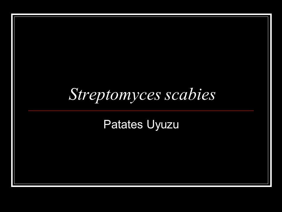 Streptomyces scabies Patates Uyuzu