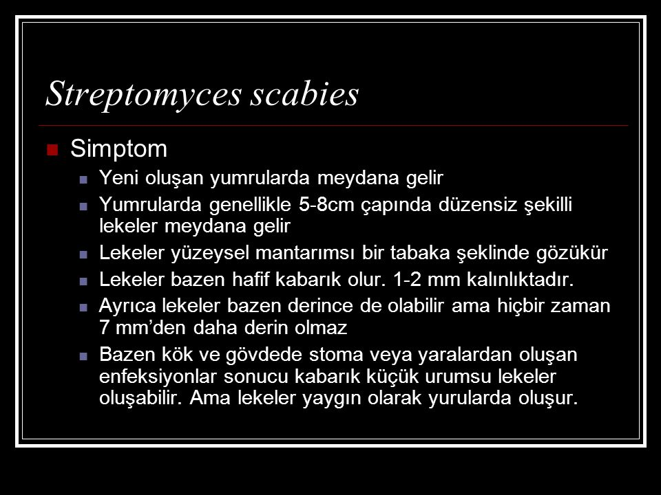 Streptomyces scabies Simptom Yeni oluşan yumrularda meydana gelir Yumrularda genellikle 5-8cm çapında düzensiz şekilli lekeler meydana gelir Lekeler yüzeysel mantarımsı bir tabaka şeklinde gözükür Lekeler bazen hafif kabarık olur.
