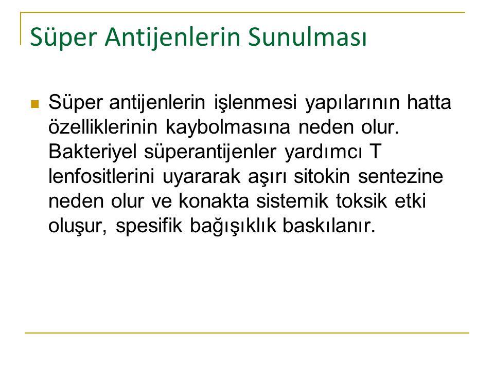Süper Antijenlerin Sunulması Süper antijenlerin işlenmesi yapılarının hatta özelliklerinin kaybolmasına neden olur. Bakteriyel süperantijenler yardımc