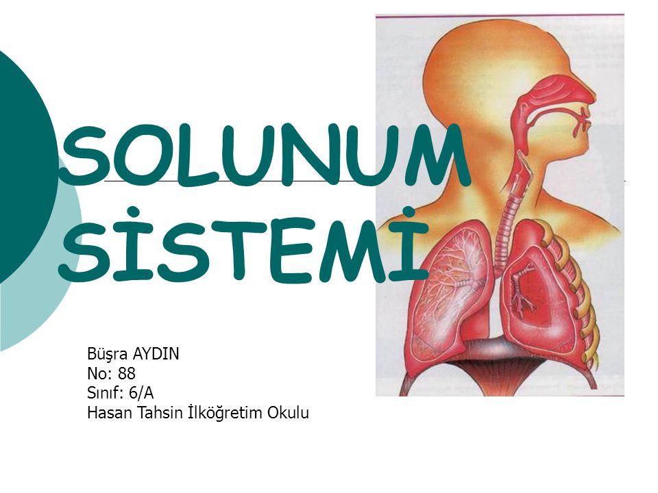 SOLUNUM SİSTEMİ Büşra AYDIN No: 88 Sınıf: 6/A Hasan Tahsin İlköğretim Okulu