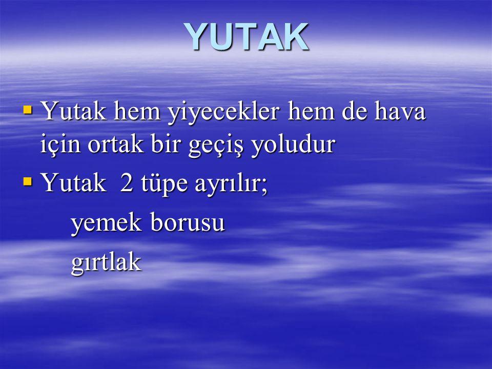 YUTAK  Yutak hem yiyecekler hem de hava için ortak bir geçiş yoludur  Yutak 2 tüpe ayrılır; yemek borusu yemek borusugırtlak