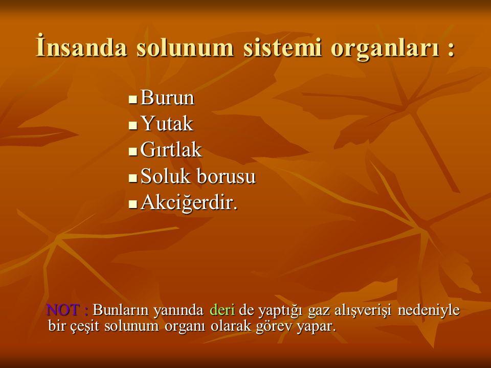 İnsanda solunum sistemi organları : Burun Burun Yutak Yutak Gırtlak Gırtlak Soluk borusu Soluk borusu Akciğerdir. Akciğerdir. NOT : Bunların yanında d