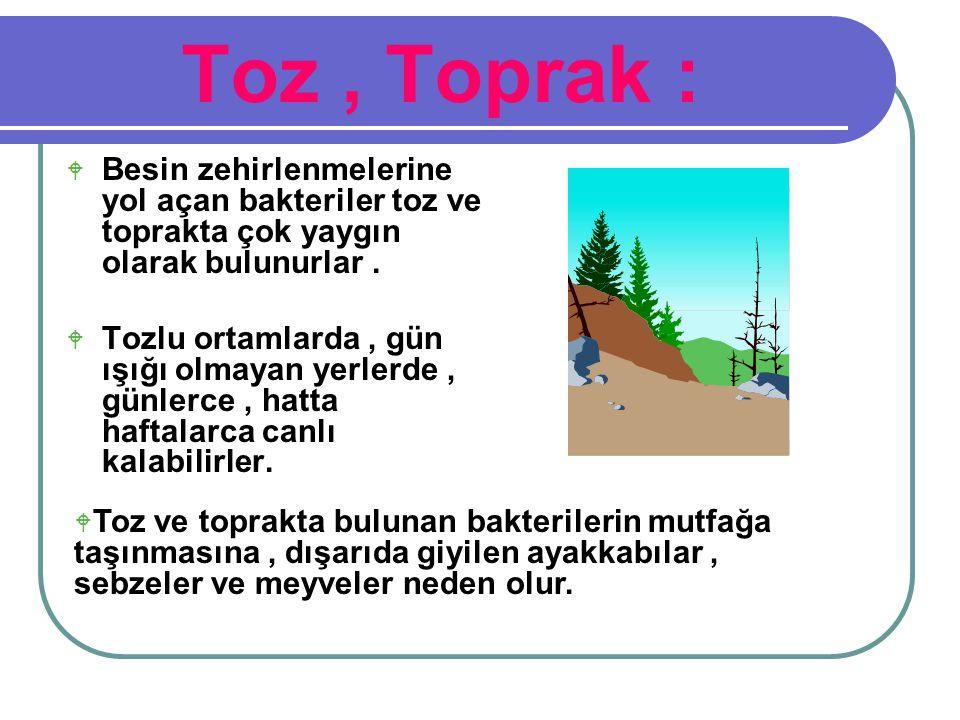 Toz, Toprak :  Besin zehirlenmelerine yol açan bakteriler toz ve toprakta çok yaygın olarak bulunurlar.  Tozlu ortamlarda, gün ışığı olmayan yerlerd