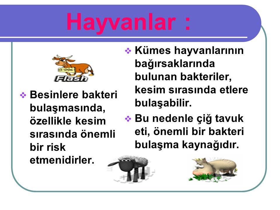 Hayvanlar :  Besinlere bakteri bulaşmasında, özellikle kesim sırasında önemli bir risk etmenidirler.  Kümes hayvanlarının bağırsaklarında bulunan ba