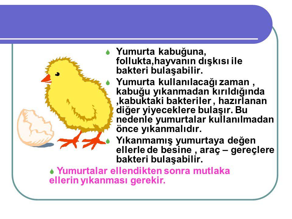  Yumurta kabuğuna, follukta,hayvanın dışkısı ile bakteri bulaşabilir.  Yumurta kullanılacağı zaman, kabuğu yıkanmadan kırıldığında,kabuktaki bakteri
