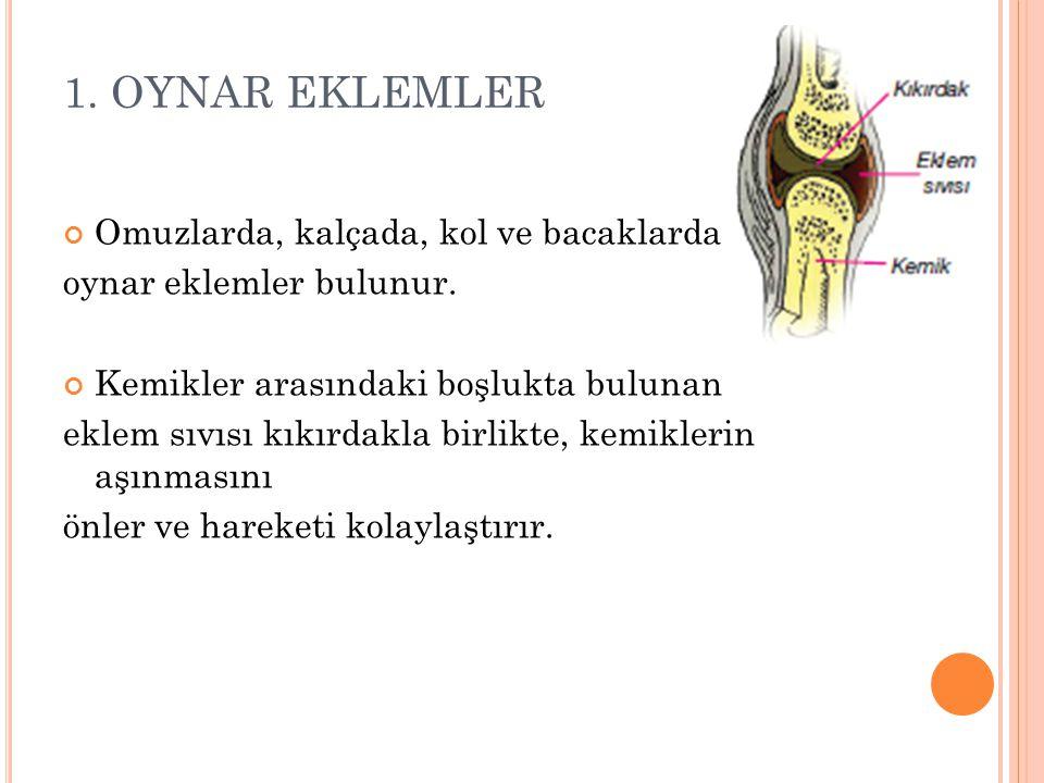 1. OYNAR EKLEMLER Omuzlarda, kalçada, kol ve bacaklarda oynar eklemler bulunur. Kemikler arasındaki boşlukta bulunan eklem sıvısı kıkırdakla birlikte,