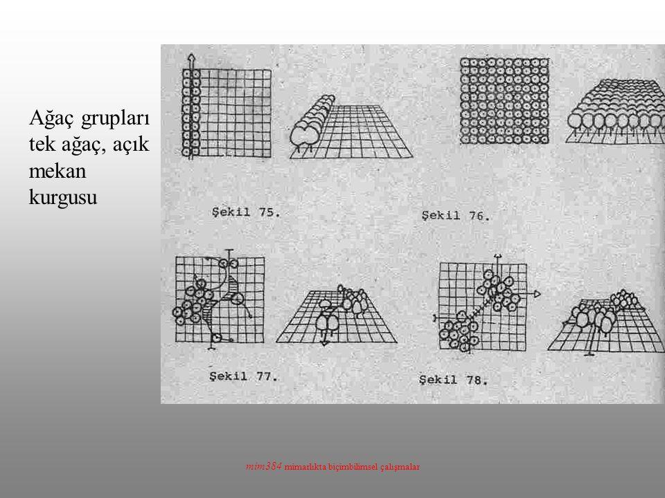 mim384 mimarlıkta biçimbilimsel çalışmalar Ağaç grupları tek ağaç, açık mekan kurgusu