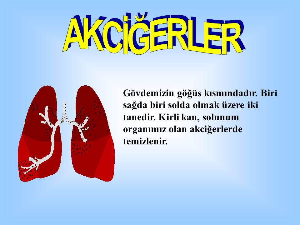 Gövdemizin göğüs kısmındadır. Biri sağda biri solda olmak üzere iki tanedir. Kirli kan, solunum organımız olan akciğerlerde temizlenir.