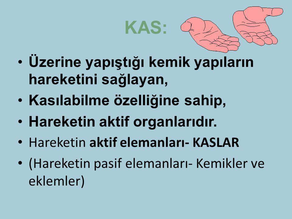 KAS: Üzerine yapıştığı kemik yapıların hareketini sağlayan, Kasılabilme özelliğine sahip, Hareketin aktif organlarıdır. Hareketin aktif elemanları- KA