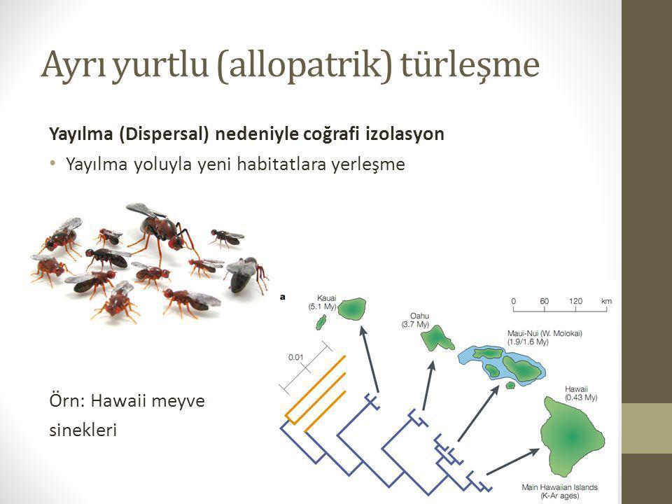 Ayrı yurtlu (allopatrik) türleşme Yayılma (Dispersal) nedeniyle coğrafi izolasyon Yayılma yoluyla yeni habitatlara yerleşme Örn: Hawaii meyve sinekler